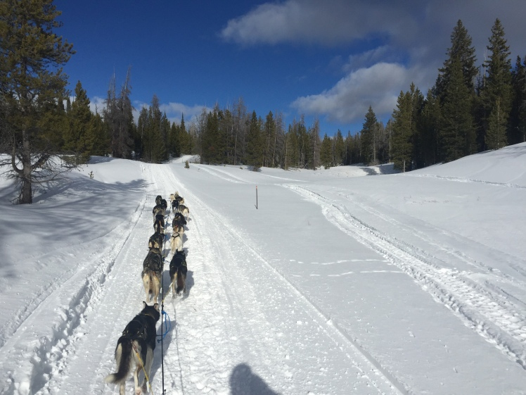 Gerry Willomitzer dog mushing training run - Wyoming
