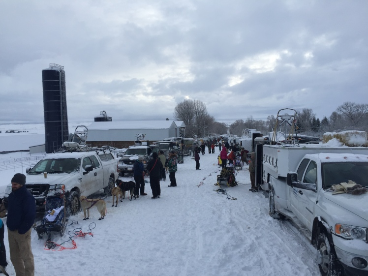 More than a dozen teams prepare to begin the first full stage of the Eukanuba Stage Stop race on Saturday, Jan. 30, 2016.