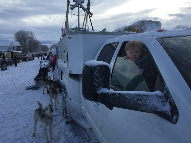 Leo checks out the scene as mushers, handlers and dogs prepare to start the first full stage Saturday morning.