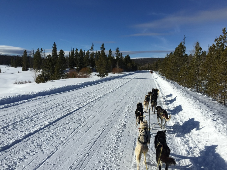 Final stage trail, 2016 Eukanuba Stage Stop