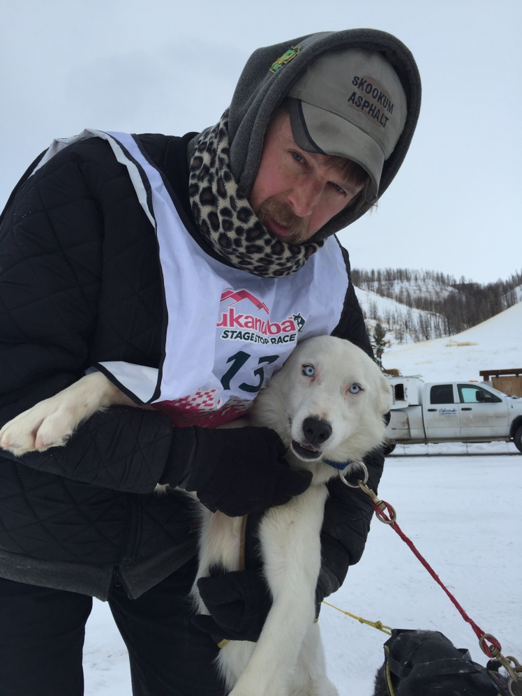 Gerry and Tundra, a rising star. He has tremendous energy and attitude, and he eats up the trail like his dad, super leader Carl. Tundra led today with Odin.